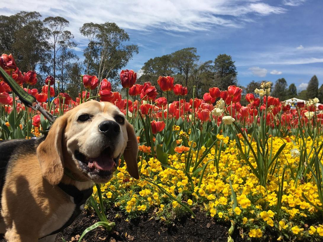 A dog sitting on a yellow flower  Description automatically generated