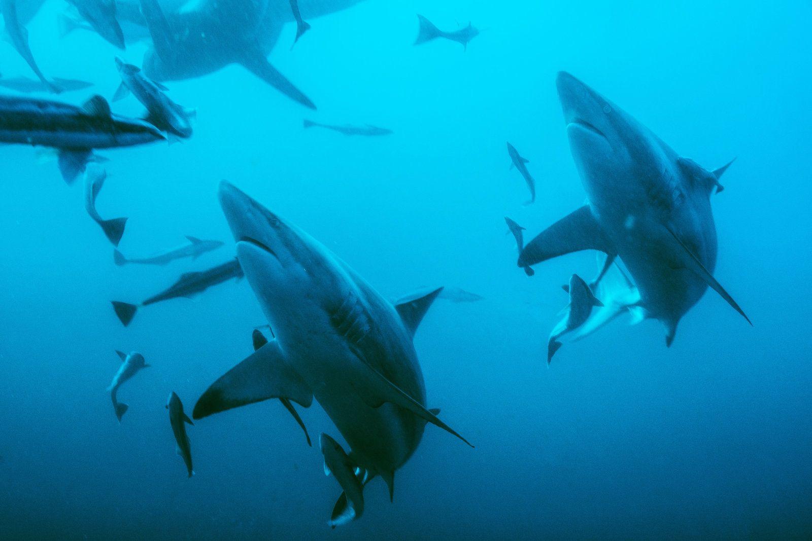 Océano sin oxígeno: El calentamiento global ataca