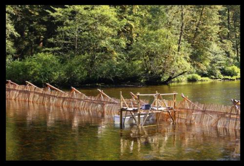 Building Koeye Weir. Photo by Grant Callegari via indiegogo.