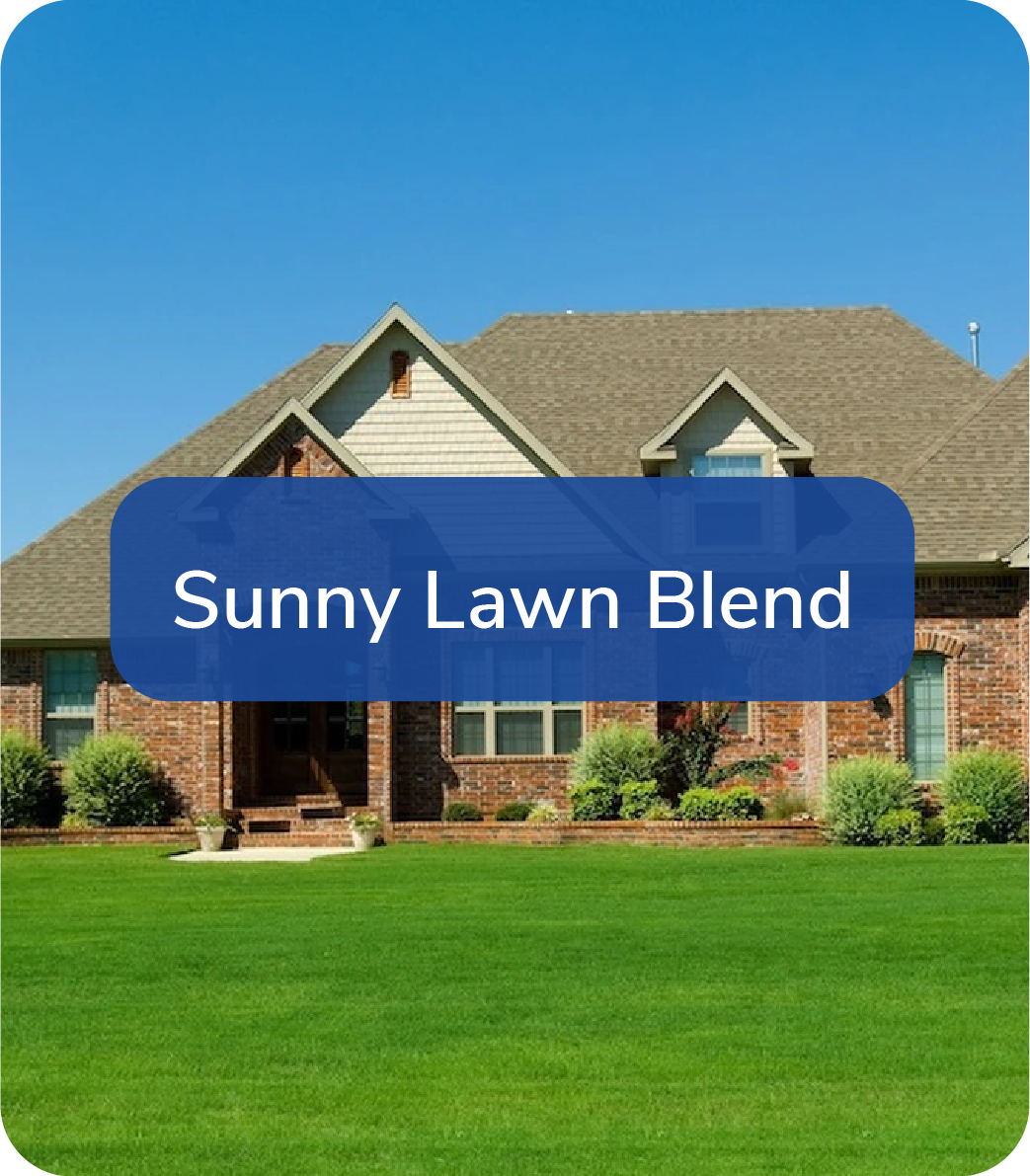 sunny lawn blend