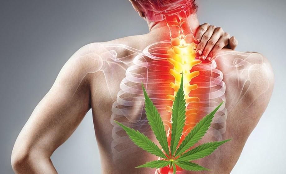Medical Marijuana Chronic Pain