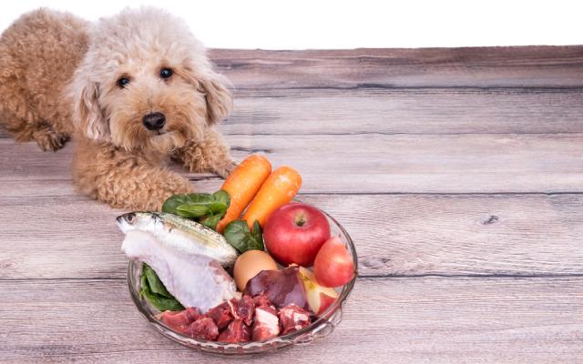 có chế độ ăn tốt khi chó thay răng