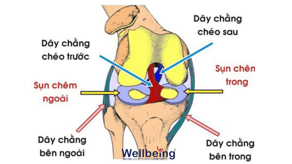 chan-thuong-dau-goi-wellbeing