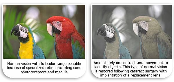 Kết quả hình ảnh cho What Colors Do Cats See?