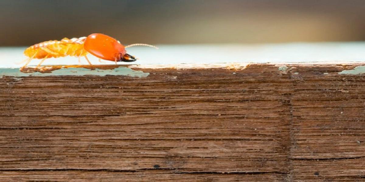 Uma imagem contendo praia, de madeira, água, tábua  Descrição gerada automaticamente