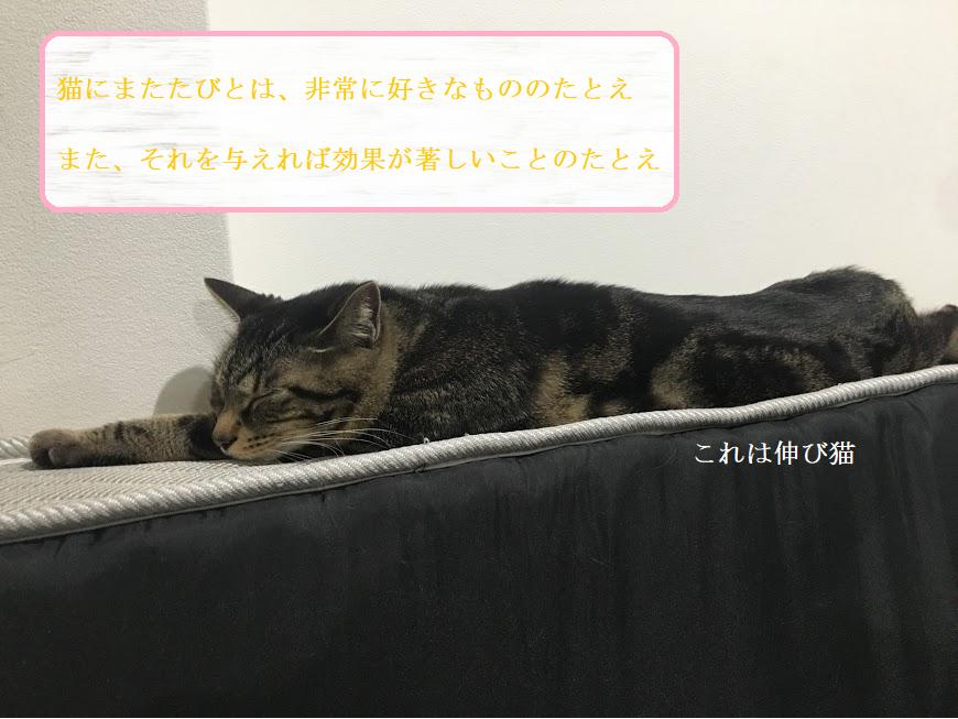 猫を虜にする「マタタビ」の与え方と危険性について