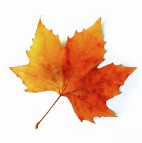 Image result for fall leaf
