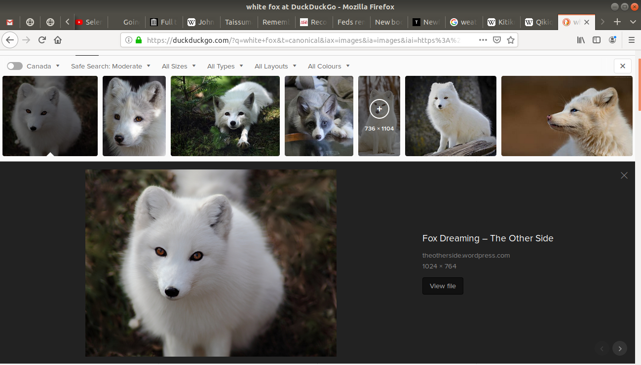an image selected of an white fox