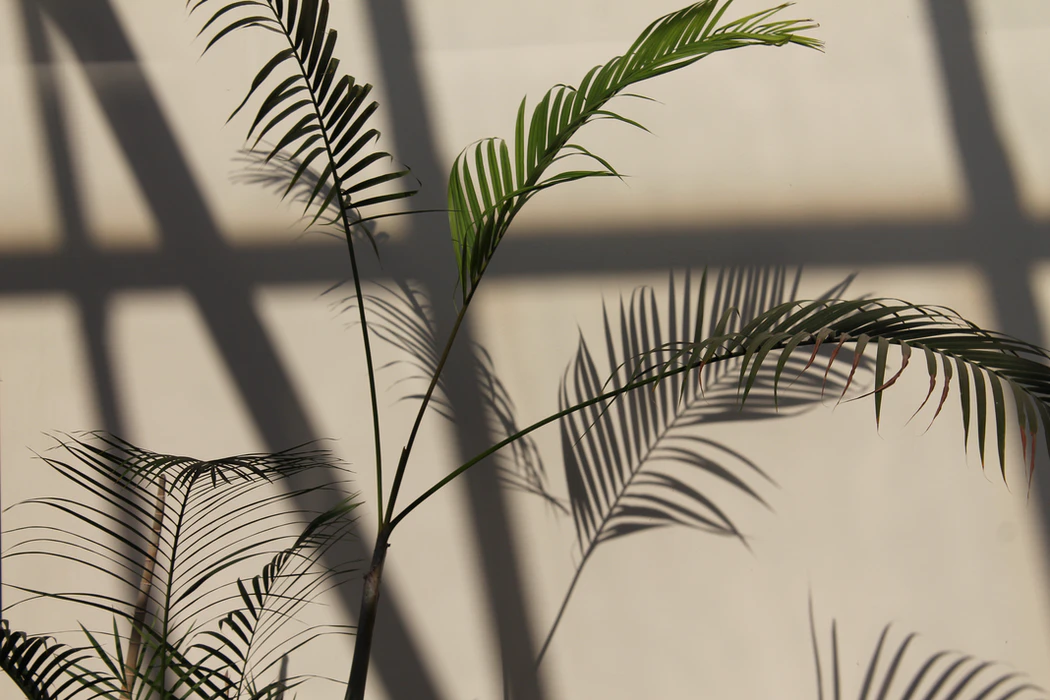 palm plant with shadows on wall