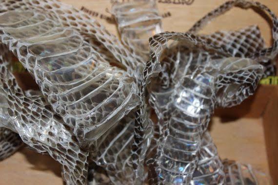 Image result for mangrove snake shedding