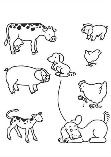 Zwierzęta na wsi - zwierzeta na wsi połacz.JPG