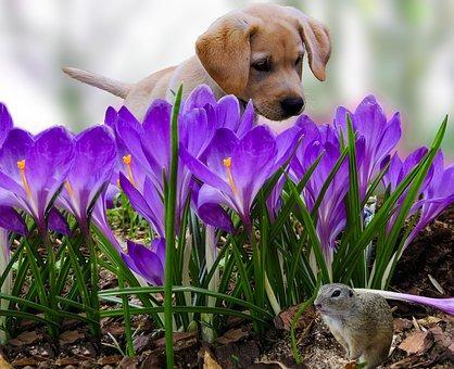 Nature, Animals, Dog, Puppy, Croissant