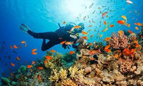 3) Try out scuba diving at Tsunami Beach.jpg