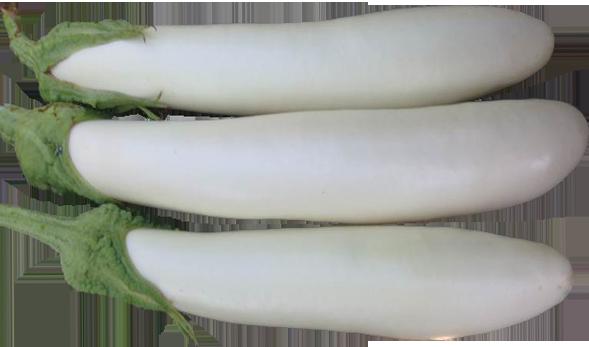 berenjensa blanca.png