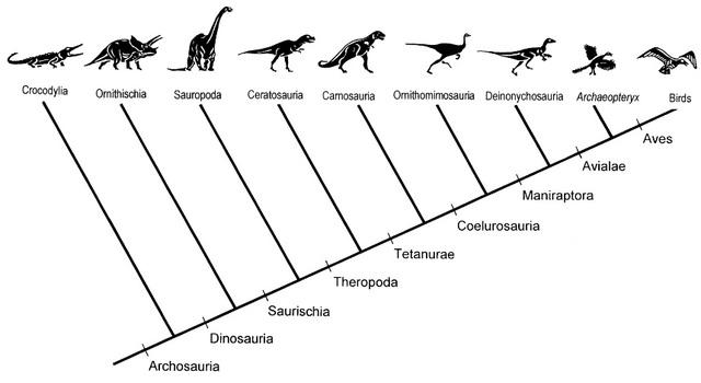 Figure 2. Archosaurs evolution tree