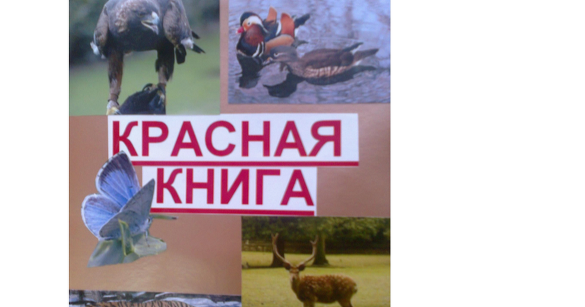 Растения И Животные Занесенные В Красную Книгу Орловской Области