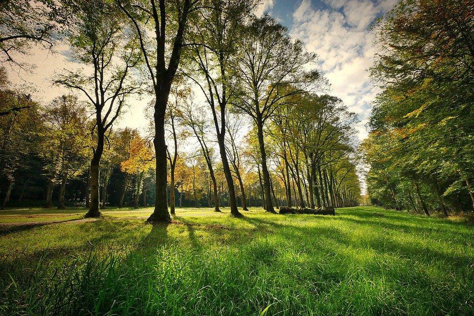 Paisagem, Árvores, Parque, Natureza, Grass