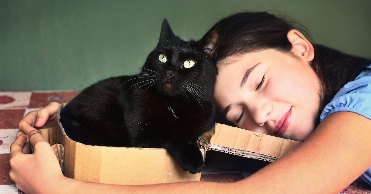 les cartons sont des espaces rassurants pour les chats