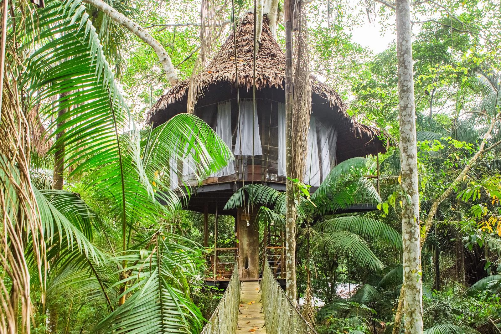 treehouse-lodge