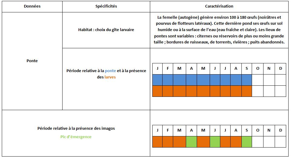 Moustiques en alg rie anopheles anopheles petragnani for Habitat rural en algerie pdf