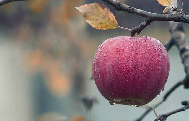 apple-1122537_640.jpg