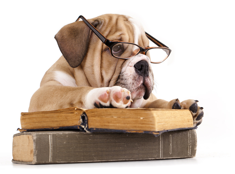 Purebred english Bulldog in glasses and book | Purebred engl… | Flickr