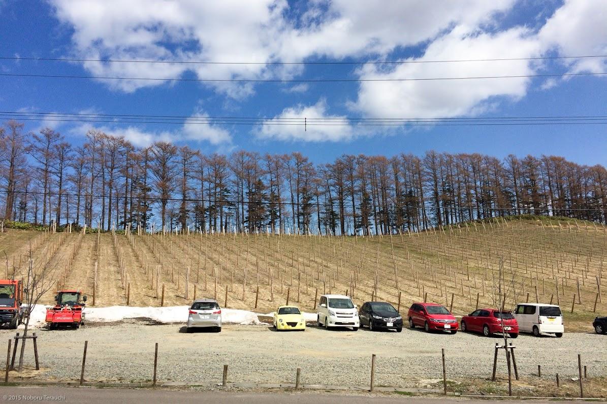 駐車場から見上げるように広がるぶどう畑