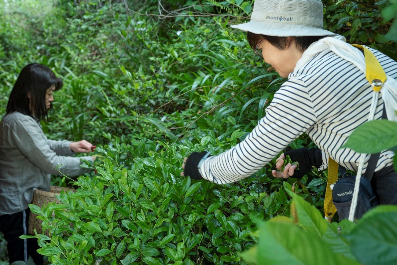 草の上にいる帽子をかぶった男性  中程度の精度で自動的に生成された説明