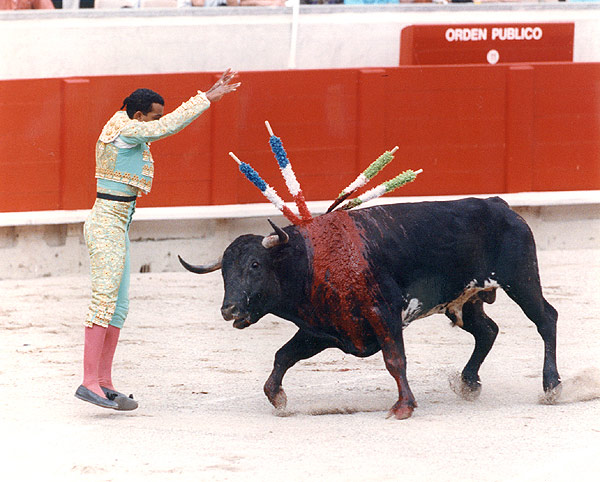 Image result for bullfighting ban
