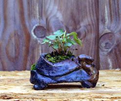 Voici mes plantes d'accompagnements HLKWMMN0VqcVtClz0jPDIpYow4y1xEZSbH1DtElaBw=w248-h208-p-no