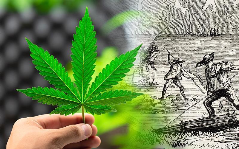 Obsah obrázku rostlina, stromPopis byl vytvořen automaticky