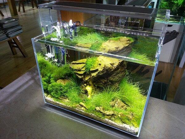Bể cá cảnh thường được dùng làm đồ trang trí phong thủy cho văn phòng