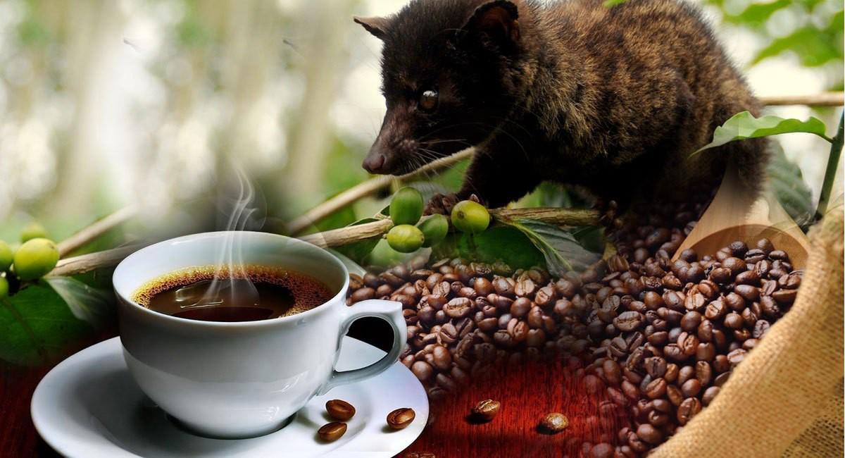 sự thật ít người biết về cà phê