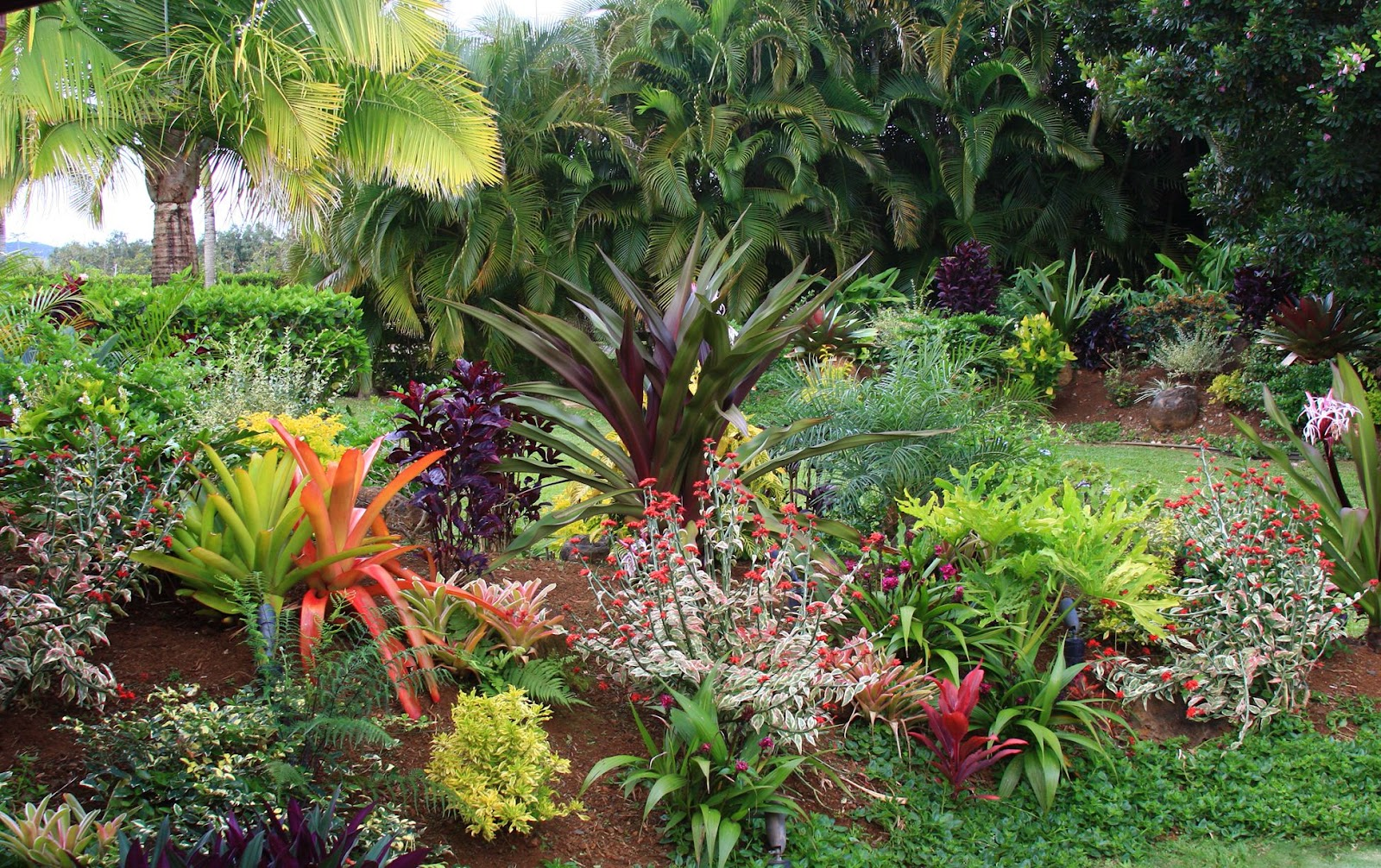 Tropical Plants For California Yards
