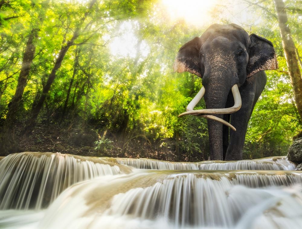 Sólo un rastro en Safari Park en Bali, en el que a veces son los elefantes. A la espera de ellos - se siente como un cazador. A la caza de la foto, por supuesto.