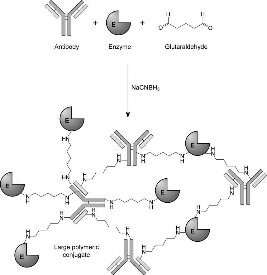 Crosslinking proteins using glutaraldehyde