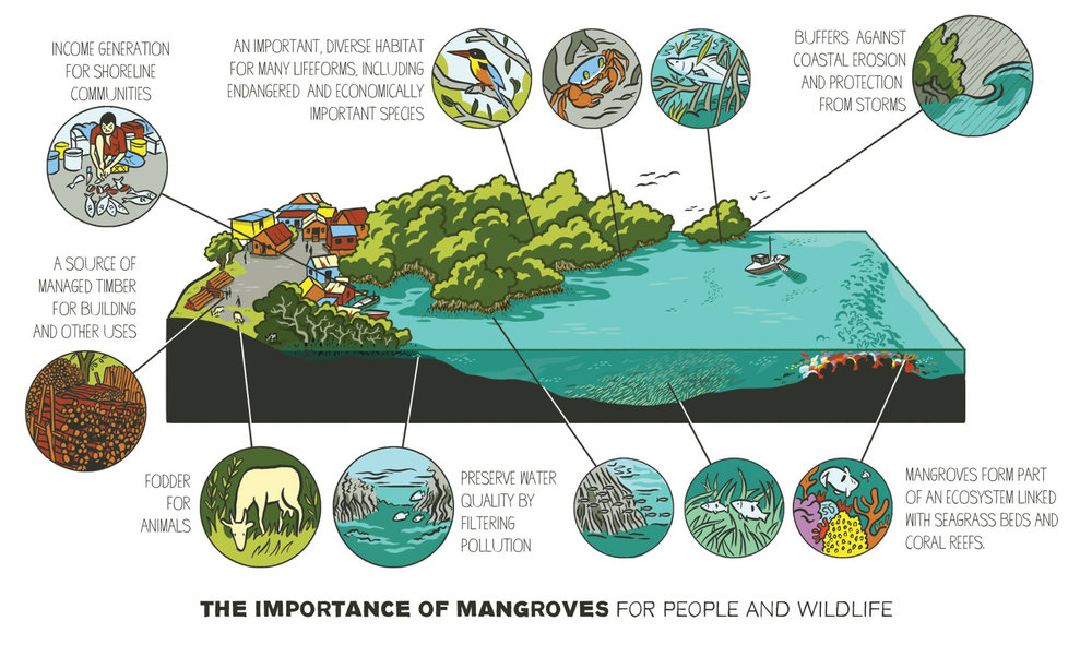 Siklus Mangrove (source: https://www.scriberia.com)