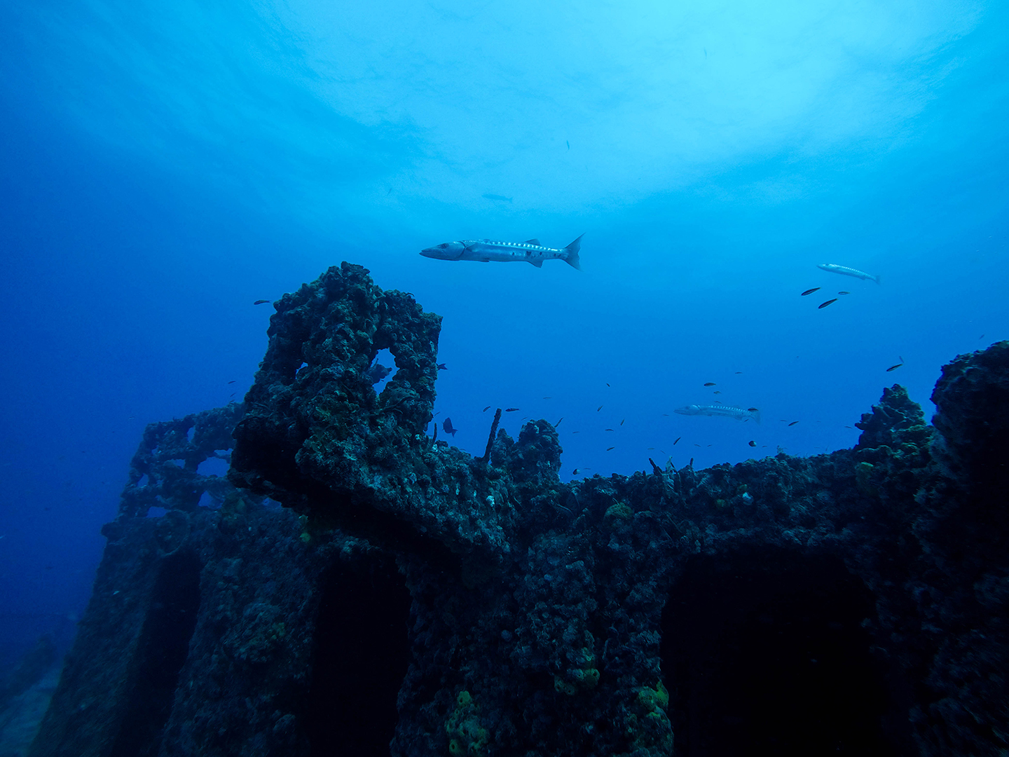 An image of a fish swimming above a shipwreck in the lower Florida Keys