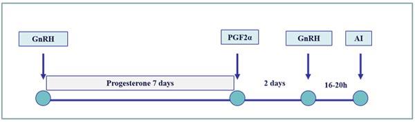 Esquema de sincronización del estro para aumentar la eficiencia de la IA a tiempo fijo en búfalas durante la temporada no reproductiva: inserción del dispositivo intravaginal de progesterona durante el programa Ovsynch. La suplementación con progesterona, entre la primera inyección de GnRH y la inyección de PGF2α, mejora la sincronía de las olas foliculares y el establecimiento de embarazos en búfalas en anestro.