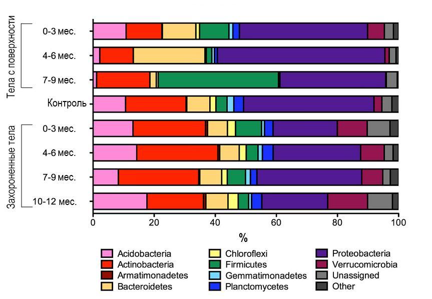 Рисунок 9 – Относительное содержание типов бактериальных сообществ в почве у тел с поверхности земли и захороненных тел, выявленное с помощью 16S рРНК секвенирования
