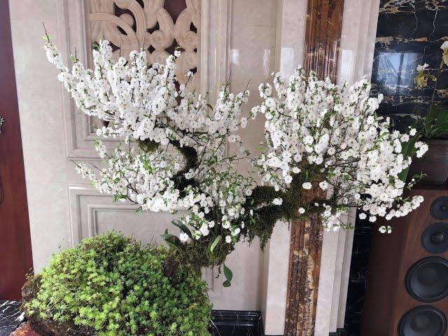 Hoa Nhất chi mai có màu trắng tinh khiết