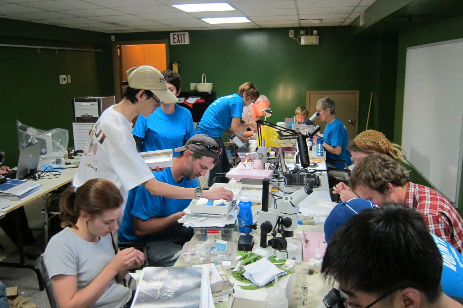 Insect team inspecting specimens at the Rouge Park Bioblitz