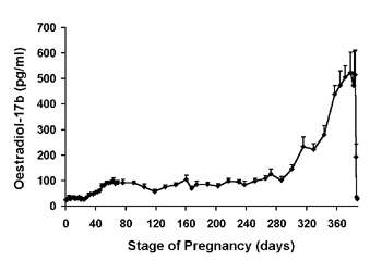 Mean (+sem) serum oestradiol-17b concentrations in pregnant camels.