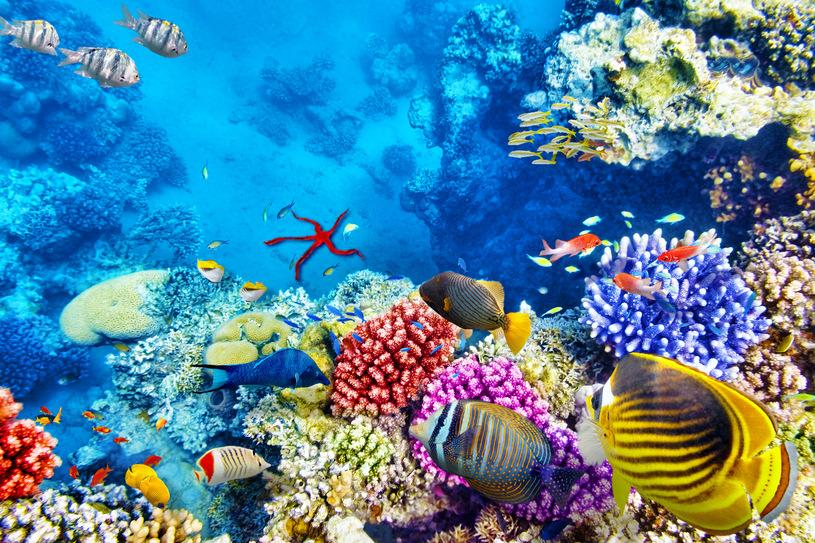 Mimo że Wielka Rafa Koralowa wciąż wygląda niesamowicie, to powoli umiera /123RF/PICSEL