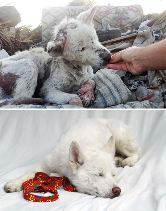 Perra blanca antes y después de ser adoptada