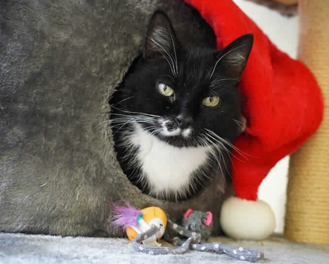 The 12 pets of Christmas | Bournemouth News & Info