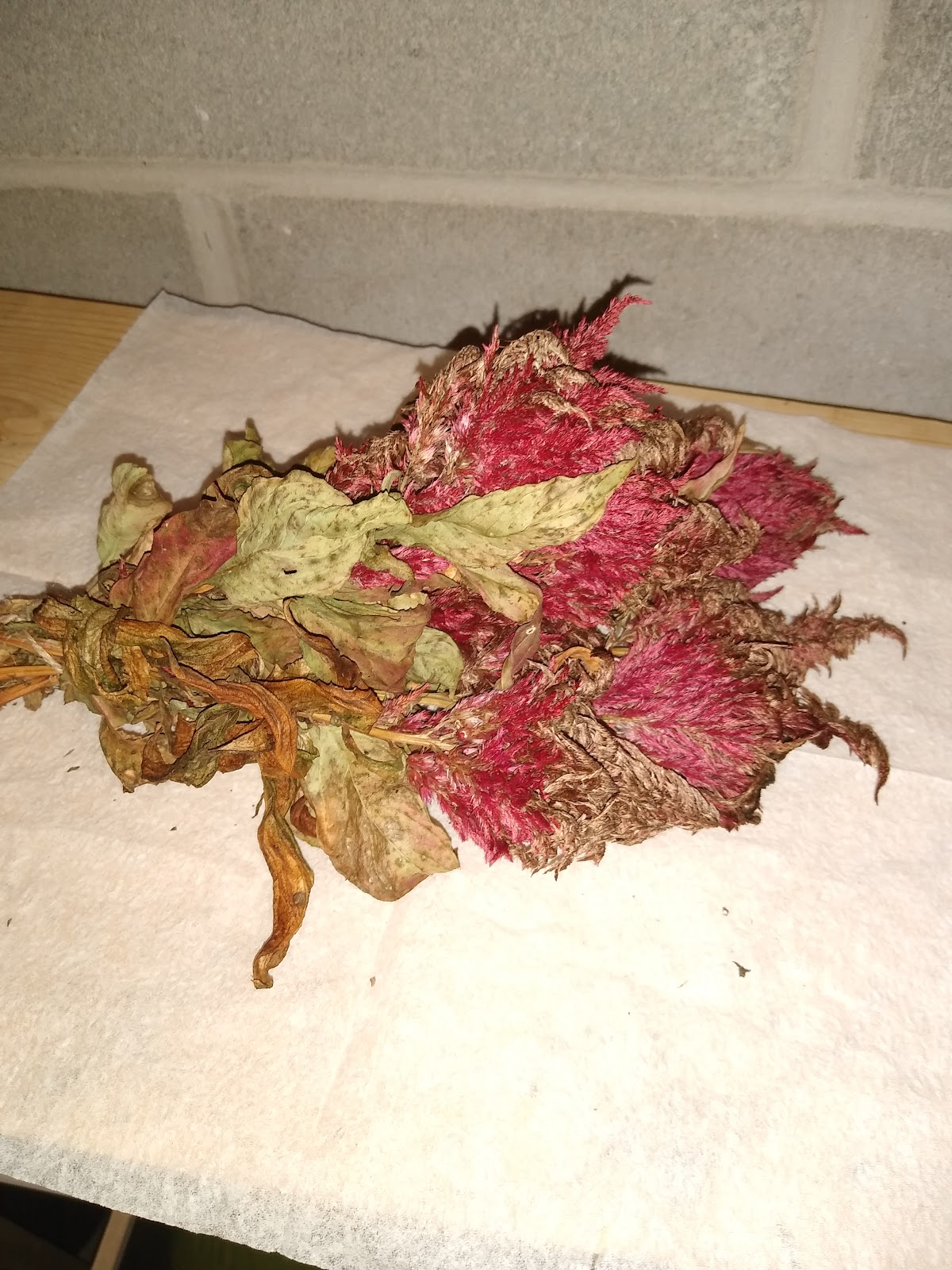 browned & dried celosia flowers