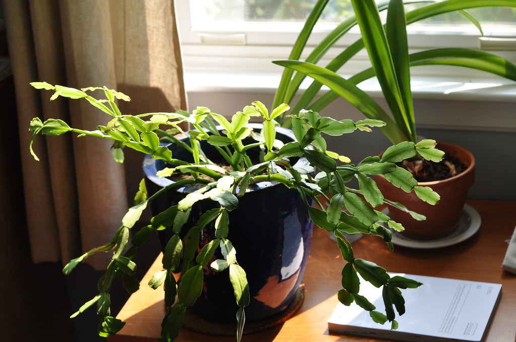 How to Care For Indoor Plants