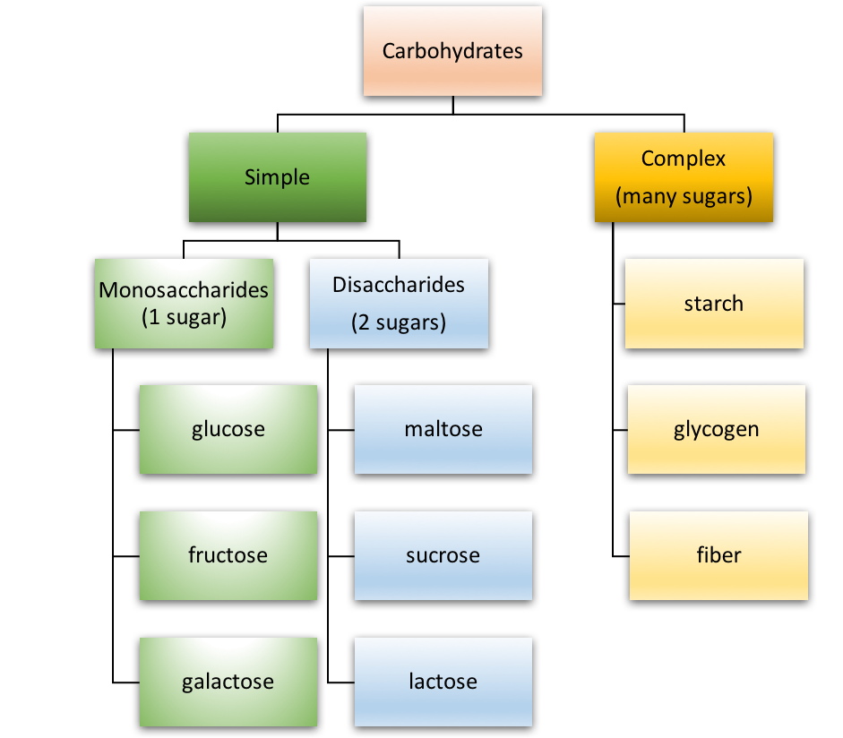 The figure outlines the major types of carbohydrates, organized as simple and complex. Under simple carbohydrates, the 3 monosaccharides (glucose, fructose, and galactose) and 3 disaccharides (maltose, sucrose, lactose) are listed. Under complex carbohydrates, starch, glycogen, and fiber are listed.