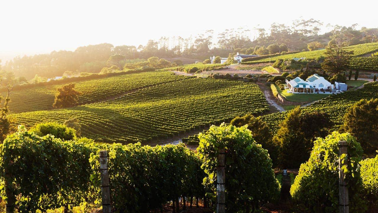 wine country in the heart of cape town